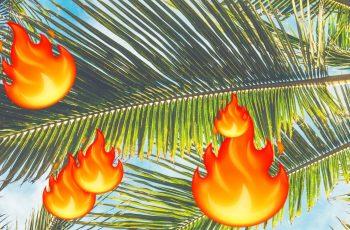Ako se baš jako želiš zapaliti na palmi - samo radi što ovaj lik radi