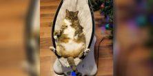 VIDEO Doslovno mačka koja uživa u električnoj kolijevci. Budi ova mačka