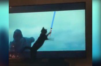Mark Hamill je opsjednut Tik Tok videom mačke koja je opsjednuta jednom Star Wars scenom
