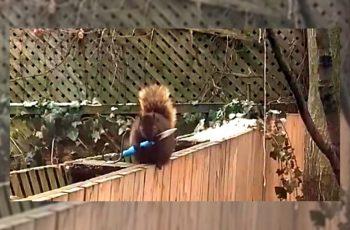 VIDEO Dobrodošli u 2021. Gdje su i vjeverice spremne za moguća s*anja
