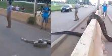 Kakva scena! Masivna zmija uvodila red na autocesti - pogledajte ovu grdosiju!